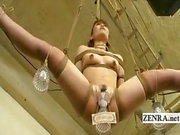 Subtitle Japanese human furniture DNA discovery history